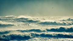 The Morning After the Storm (James Duckworth) Tags: jamesduckworthphotography outerbanks bird coast coastal dayafterthestorm fineartphotography landscape nobody oceans overcast roughseas seas seascape sky storm stormy water waves wind windblown