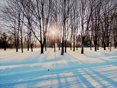 Chilly Winter (elenashen5) Tags: winter sunshine trees bare cold scenery pale