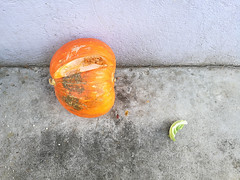 (puss_in_boots) Tags: marrow compost abstract orange still life