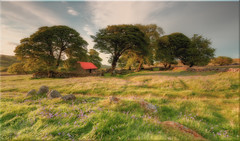 Emsworthy Barn (Dartmoor) [Explored 07/06/2015] (Nickerzzzzz - Thanks for stopping by :)) Tags: ©nickudy landscape dartmoor emsworthy barn sky moor tree grass bluebells rocks photography widecombeinthemoor explored