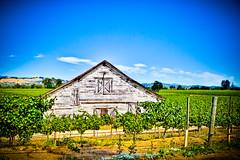 090801WineTasting-5013-Blend.jpg (LucaFoto!) Tags: architecture drycreek wine postcard vine winery com russianriver vinyard lightroom healdsberg westsideroad lucafoto lucasbury