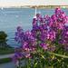 Flowering Fort Allen
