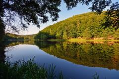 C'est un endroit trs calme, serein paisible (Excalibur67) Tags: forest landscape nikon sigma paysage reflexion reflets eaux tangs d7100 vosgesdunord forts ex1020f456dchsm