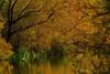 Not Far From The Madding Crowd........ (klythawk) Tags: reflections nature autumn pond duck mallard reeds sunlight shadows green brown yellow olympus em1 omd 300mm 14xtc attenboroughnaturereserve beeston nottingham klythawk