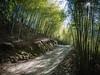 綠竹仙境 (*泛攝影*) Tags: tree plant green bamboo road 戶外 景深 panasonic gx7 color 樹 陽光 explore 探索 dof light 台灣 taiwan