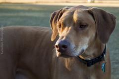 B**** Please! (Kelushan (Joshua Davis)) Tags: dog canine animal photography nature life