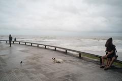 #20 (Sakulchai Sikitikul) Tags: street snap streetphotography songkhla sony a7s thailand samilabeach seascape sea beach 28mm voigtlander lover hug dog bird