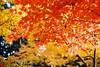 Momiji (Coto Language Academy) Tags: nihongo japanese japan jlpt katakana hiragana kanji studyjapanese funjapanese japonaise giapponese japones japanisch 日本 japaneseschool cotoacademy momiji tokyo autumn ⠀