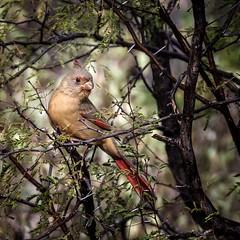 So... ? (Portraying Life, LLC) Tags: unitedstates arizona pima handheld nativelighting wild ventanacanyonwash