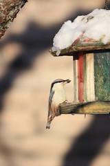 Поползень таскает семечки (РЕММАНИ) Tags: реммани поздравляем рождество праздник времяподарков луна поползень кормушка отдыхпослеработы морозисолнце птица nuthatch bird trough