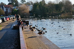 Sutton Park - Wyndley Gate (tim ellis) Tags: suttonpark park wyndley wyndleygate wyndleypool bird suttoncoldfield uk