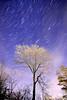 Tree Trails (Richard D Porter) Tags: stars startrails tree astrolandscape astro nightsky canon tokina 1116mm f28 longexposure