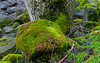 Mossy Boulder Riverbank (Orbmiser) Tags: 70300vr d90 nikon oregon portland winter willametteriver riverbank boulders tree moss lichen