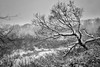 Snow Day (djrocks66) Tags: nature outdoors winter cold snow sunset sunrise animals wildlife deer run beach ocean dunes water shore rocks birds bif long island ny fuji fujifilm xt2 landscapes waterscapes oceanscapes hiking
