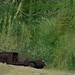 Cedar Creek Car