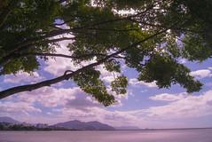 Cairns Coast (Josué Godoy) Tags: landscape seascape australia tree sea mar mer paisaje paysage arbol arbre