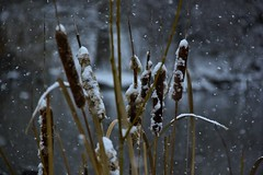 Chasing Snow (The Photo Gallivant) Tags: snow ice manhattan winter morning centralpark nyc newyorkcity newyork unitedstates photography photographer photos thephotogallivant