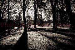 Ward Park Shadows (Photographer Dave C) Tags: walkni bangor beauty blackwhite shadow sun winter photography passion photographerdave photograph photographer 2017 canon canon400d canonofficial canon40d canoninc canona1 landscape light