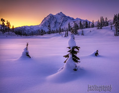 Mount ShuksanThreeTrees_720_Logo (kevin mcneal) Tags: winter winterlandscapes northcascadesnationalpark natureimages mountshuksan picturelake snow seasons pacificnorthwest