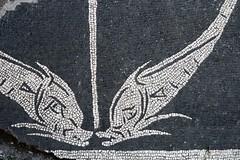 Dolphin floor mosaic fragment, Baths of Caracalla, c215 CE, Rome.. (edk7) Tags: nikond50 edk7 2007 italy italia lazio rome roma regionexiipiscinapublica bathsofcaracalla termedicaracalla ancientpublicbaths thermae 21117ce floormosaicfragment dolphin architecture building oldstructure roman ruin ruins abandoned ancient empire city cityscape urban excavation scavi park garden unescoworldheritagesite museum openairmuseum archaeology mosaic