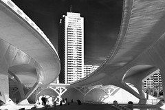 Pont de Mont Olivet (@WineAlchemy1) Tags: pontdemontolivet valència cityofartsandsciences whiteconcrete organiccurves ciutatdelesartsilesciències ciudaddelasartesylasciencias 12treasuresofspain jardídeltúria santiagocalatrava blackandwhite architecture
