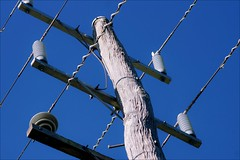 Bared of branches (flowrwolf) Tags: outside outdoors outdoor pole treetrunk wires electricitypole barebranches electricitywires woodenpole flowrwolf 115picturesin22015 58barebranchesfor115in2015