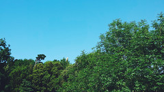 Si no miras no verás (maitane94) Tags: verde bosque monte urgul
