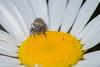 Spider Macro (Scott Michaels) Tags: macro eye spider nikon kirk d600 nikon105mmvr flashbracket tc17 sb400 sc28