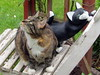 IMG_0188 (d_fust) Tags: animal cat tiere kitten gato katze 猫 macska gatto katzen fust kedi ronja 貓 anak katt gatito kissa kätzchen gattino kucing 小貓 고양이 katje кот γάτα γατάκι แมว yavrusu 仔猫 का बिल्ली बच्चा