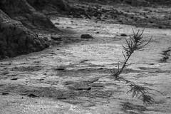 Let me grow (Clalemany) Tags: nature canon 50mm spain desert desierto navarre navarra bardenas reales 700d