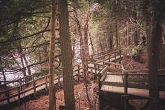 Crawford Lake 1 (Sarah A Janes) Tags: crawfordlake conservation hiking outdoors photography nature getoutside halton fall autumn canon 5dii