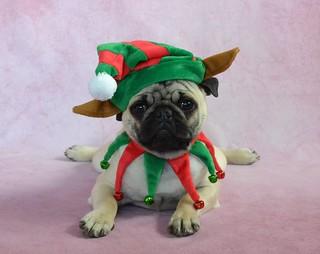 Boo Lefou the Pug Elf Pancake