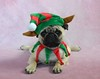 Pug Elf Pancake (DaPuglet) Tags: pug dog christmas puppy elf holiday costume funny cute lol dapuglet boothepug pets pugs dogs animal animals pet elves hat