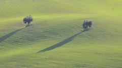 toscana? no marche! (maurizio.s.) Tags: green verde erba grass shadow ombra monsampolodeltronto monsampolo del tronto