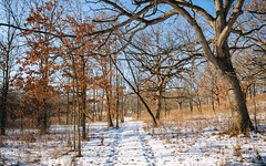 If We Were Trees (John Westrock) Tags: retzernaturecenter nature trees trail winter snow bluesky waukesha wisconsin canoneos5dmarkiii canonef1635mmf4lis midwest