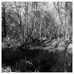 The sound of life (heinrich_511) Tags: woods forest wood pond trees blackandwhite beauty monochrome iphone6plus soundoflife