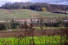 2013-03-20 GeoCaching 38 (dks-spezial) Tags: geocaching markgräflerland eisenbahn rheintalbahn reben weinberg