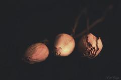 2/53 (A. del Campo) Tags: rosas roses bokeh nikon nikkor nikond7000 composición composition stilllife bodegón luz luznatural sombras shadows naturaleza nature naturallight natural flores flora flowers color colors día day españa flor light spain