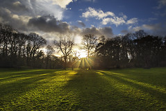 Leading Sun (Jon and Sian Bishop) Tags: sun ray clyne gardens trees forest green grass clouds sky leading lines gower swansea park outdoor landscape horizontal sunset horizon silhouette canon eos 6d photography jon bishop light aperture vanishing point