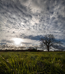 Simplicity (Jean-Luc Peluchon) Tags: fz1000 lumix panasonic field campaign tree grass rural sky cloud sunset sun