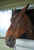 And So To Sleep (meniscuslens) Tags: horse trust sleep charity buckinghamshire