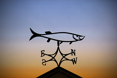 Must Be Good Fishing Weather (Brian 104) Tags: weathervane sculpture metal roof directional fish