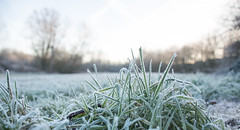 Frosty and Hazy Morning (Jacqueline138Kelly) Tags: jacquelinekelly nikon d5200 18250macro frosty frozen nature cold wintery winter field