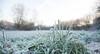 Frosty and Hazy Morning (Jacqueline138Kelly) Tags: jacquelinekelly nikon d5200 18250macro frosty frozen nature cold wintery winter field