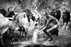 Surma (daniele romagnoli - Tanks for 15 million views) Tags: suri surma ethiopia etiopia äthiopien ethiopie etiyopya etiopien αιθιοπία أثيوبيا エチオピア 에티오피아 इथिय ोपिया эфиопия אתיופיה أفريقيا 比亚 etiopija africa afrique アフリカ 非洲 африка αφρική afrika 아프리카 etnia etnico ethnique этниче 種族 民族性 ethnicity tribu tribes tribo tribale tribal tribe племя 部族 omo afrikan africani romagnolidaniele omoriver omovalley valledellomo 埃塞俄比亚 etnias nikon d800 decorazioni artistico pigmento artistic tradizione ethnie ethnic cultura ethnology етиопија cow mucche cows biancoenero blackandwhite monocromo bianconero bw rito