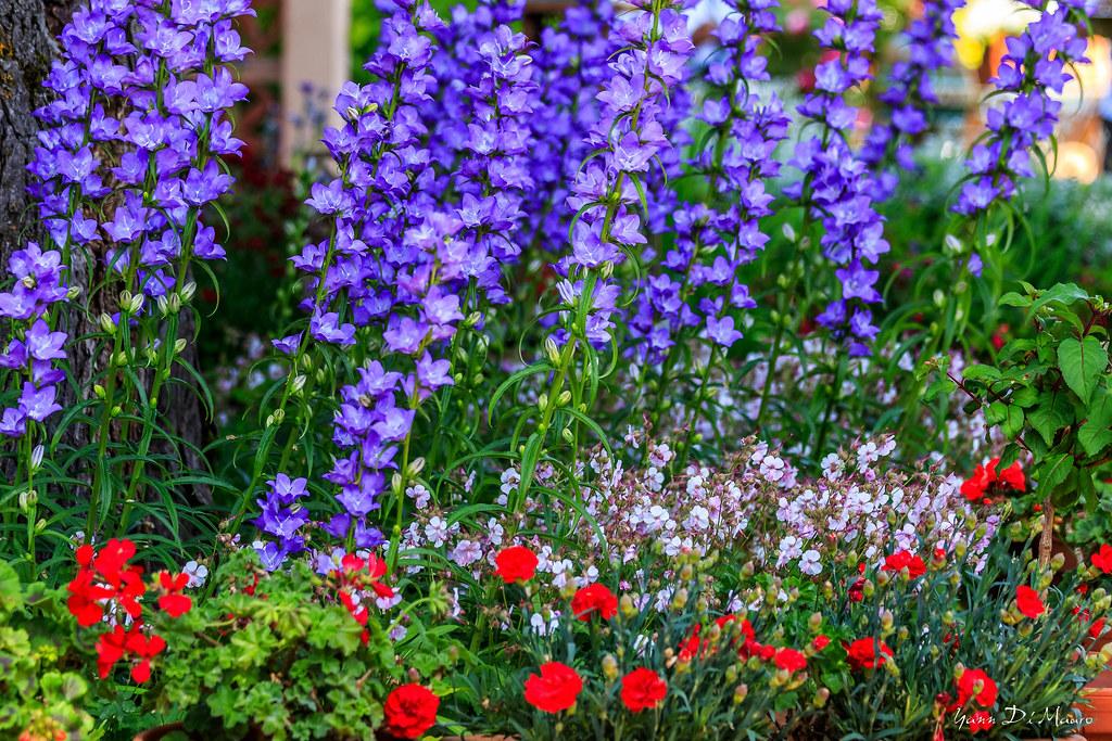 Jardins Secrets Yanndimauro Tags France Secret Jardin Fr Vaulx Rhonealpes Jardinssecrets