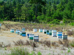 Apiculture, Rhodes style (pefkosmad) Tags: vacation holiday bees hellas insects greece greekislands griechenland rodos rhodes beekeeping beehives dodecanese apiculture rhodes2015