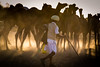 End of the day (Karthikeyan.chinna) Tags: karthikeyan chinnathamby chinna canon canon5d canon5dmarkiii pushkar rajasthan india people camel fair herd herder man sunrays sunlight rays light yellow travel cwc chennaiweekendclickers