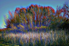 Fall Trees on the Side of the Reservoir (Rusty Russ) Tags: tree reeds autumn photoshop flickr google bing daum yahoo image stumbleupon facebook getty national geographic magazine creative creativity montage composite manipulation color hue saturation flickrhivemind pinterest reddit flickriver pixelpeeper blog openuniversity flic twitter alpilo commons wiki wikimedia worldskills oceannetworks ilri comflight newsroom fiveprime photoscape winners all people young photographers paysage artistic photo pin stockpainterly paint brush painttexture tumblr style outside digital picture newburyport north shore cape ann interesting surreal avant guarde