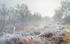 Freezing light 2 (piotrekfil) Tags: nature landscape winter fog mist ice tree rime hoarfrost poland pentax piotrfil